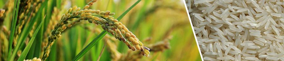 ryż - ryhenka.com ZDROWIE od KUCHNI