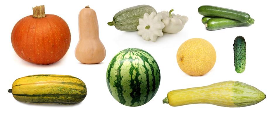 warzywa dyniowate ryhenka.com Zdrowie od KUCHNI