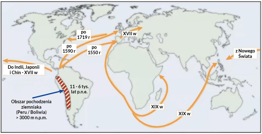 Ramy czasowe, kierunki i zasięg migracji ziemniaka