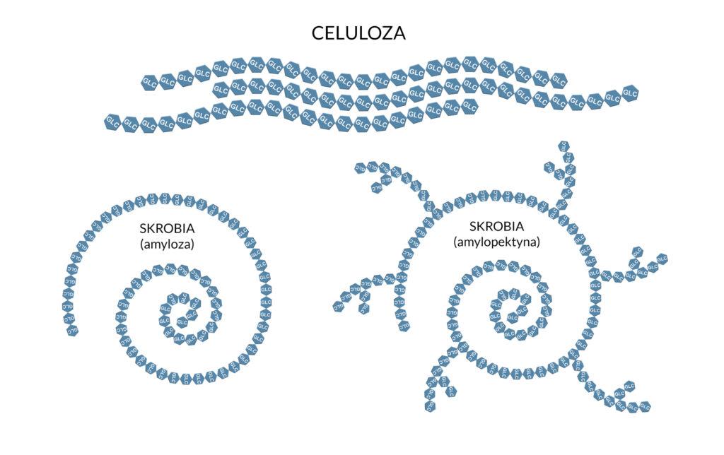 celuloza i skrobia (amyloza i amylopektyna)